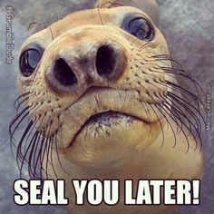 #Seal #Sea #Mammal #Farewell #GrumbleDude (at @Dylon Whyte)