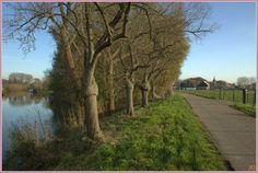 """In de verte zien we het mooie dorp Enspijk nauw verbonden met de rivier de Linge, de langste rivier van Nederland binnen de landsgrensen. in Enspijk kun je met een fiest- en voetveer """"Het Spijkse Veer"""" in de zomermaanden de Linge oversteken naar het Landgoed Marienwaerdt en daar de beroemde Notenkade en Appeldijk bezoeken."""