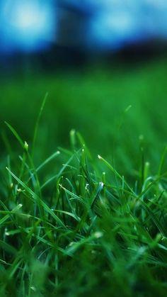 Grass Wallpaper of iPhone 6