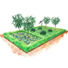 Garden Plans for Shady Spots....Formal Shady Garden...Dramatic tree-form hydrangeas create a striking contrast with foliage from hosta, lady's mantle, and ligularia. Garden size: 10 by 17 feet...download plans