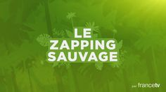 FRANCE TV – Zapping Sauvage /// Motion design