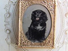 Cute Little Dog Gem Tintype Photograph on CDV Size Backing   eBay