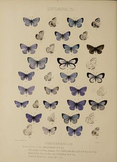Room Posters, Poster Wall, Poster Prints, Vintage Butterfly, Butterfly Art, Butterflies, Butterfly Images, Art Papillon, Wall Collage