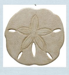 Sand Dollar Wall Art. Hand-carved and hand-painted wood creates this charming Sand Dollar to grace your wall. Textured to replicate sand, gives it the extra beach touch. At over a foot wide, this Sand Dollar fills the space.