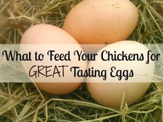 """Improve the Flavor of Your Chickens Eggs Homesteading  - The Homestead Survival .Com     """"Please Share This Pin"""""""