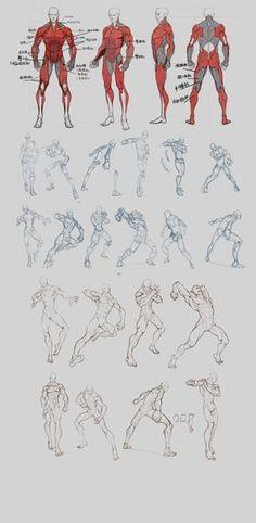 Anatomy references.