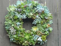 "Succulent Wreath - 15"" Round Succulent Wreath - Round Succulent Wreath. $95.00, via Etsy."