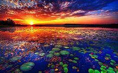 Lago de los Lotos: un paraíso escondido en Tailandia (FOTOS)