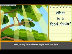A good food chain video to start off a lesson. It talks about the different types of consumers and producers and how living things eat other living things to get energy. SC.4.L.17.2- Explain that animals, including humans, cannot make their own food and that when animals eat plants or other animals, the energy stored in the food source is passed to them.