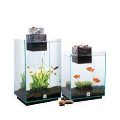 Fluval Chi Aquarium Kit 6.6-gallon capacity (Fluval)
