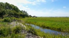 http://ak.picdn.net/shutterstock/videos/2396441/preview/stock-footage-dutch-landscape-with-grass-and-water.jpg