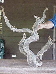 """Pasos para crear un bonsái """"tanuki"""" - Foro de InfoJardín"""