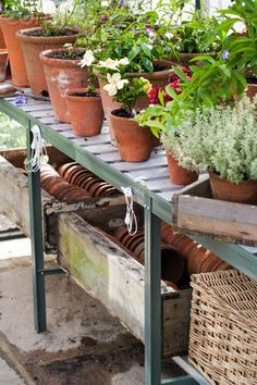 I resolve to have more Potted plants in a greenhouse providing flowers and foliage for my designs