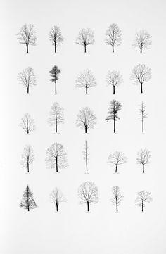 Katie Holten, US Trees 2