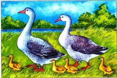 kačky Baby Zoo Animals, Farm Animals, Animals And Pets, Cute Animals, Art Drawings For Kids, Easy Drawings, Animal Drawings, Farm Pictures, Coq