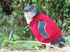 Penguin in a sweater