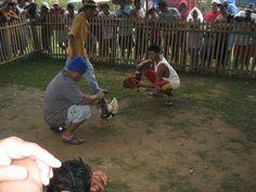 Cockfight in Hilongos, Philippines