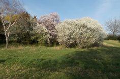 Prolećna idila na obali kraj reke Tise-