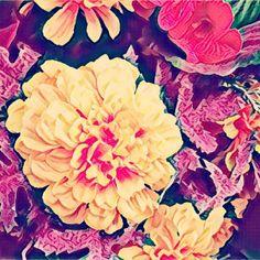 A burst of energizing #colour . #joy #orangejoys #orange #yellow #flowerstagram #flowers