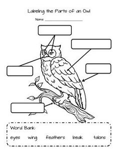 Worksheet for labeling the parts of an owl: eyes, beak, talons, wings and…