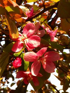 그리운 봄날