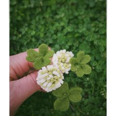 Putting together a St Patrick's Day clip for a special little girl and finding inspiration right in my own backyard 😊🍀 Felt Flowers, Diy Flowers, Paper Flowers, Felt Crafts, Crafts To Make, Diy Crafts, Puppy Bandana, Clover Flower, Luck Of The Irish