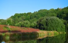 Le lac du domaine et sa biodiversité