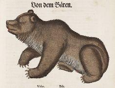 Thierbuch, Konrad Gesner, 1563.