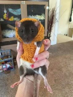 I had no idea that a pic of a rat in a sweater was exactly what I needed. Animals And Pets, Baby Animals, Funny Animals, Cute Animals, Rata Dumbo, Chug Dog, Dumbo Rat, Rat Toys, Fancy Rat