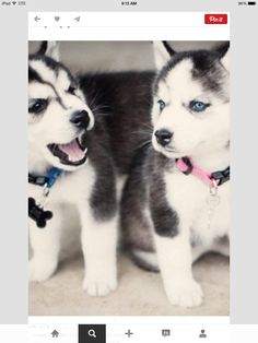 Cutest. Things. On. Earth. Ever. I plan on having 6 of them