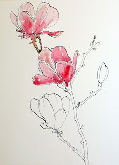 Pen and Watercolor Techniques   Start watercolor wash for pink magnolias pen ink and wash painting