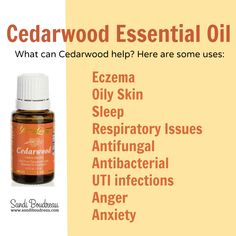 Oily Skin? Eczema? Itchy? Cedarwood Oil can help with all of the above, and more. http://www.sandiboudreau.com/cedarwood-oil-uses-eczema-oily-skin-sleep/