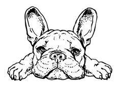 Drawn puppy - Buy this stock vector and explore similar vectors at Adobe Stock Bulldog sketch. Vector illustration of french bulldog. - Buy this stock vector and explore similar vectors at Adobe Stock French Bulldog Names Girl, French Bulldog Quotes, French Bulldog Full Grown, French Bulldog Drawing, French Bulldog Harness, Brindle French Bulldog, French Bulldog Tattoo, Black French Bulldogs, Cute French Bulldog