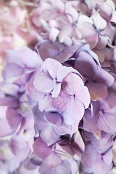 The hydrangea is a powerhouse flower; it delivers more blooms for your buck, since a single stem is so voluminous. The flower symbolizes perseverance and heartfelt emotions.