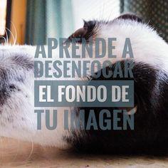 Nueva entrada de blog. Aprende a desenfocar el fondo de tu foto. ¡Entra y comenta!  #tutorial #bokeh #profundidaddecampo #desenfoque #naranjofoto #unnaranjo  #blog #fotografia #foto #UnNaranjo #perro