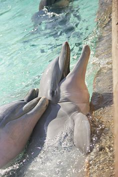 Learn to laugh The Ocean, Ocean Life, Beautiful Sea Creatures, Animals Beautiful, Cute Baby Animals, Animals And Pets, Strange Animals, Bottlenose Dolphin, Whales