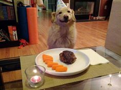 HEEHEE!!! =) Every dog should be treated like this on its birthday - Imgur