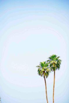 Palm Tree living. #DreamingInBlue