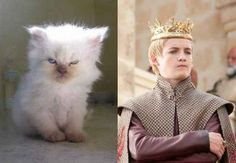 "Joffrey Baratheon | The Characters Of ""Game Of Thrones"" As Cats"