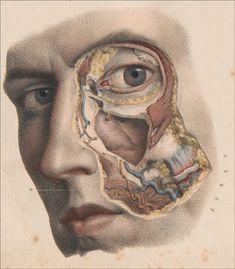 Traite complet de l'anatomie de l'homme, 1840, Bourgery and Jacob.