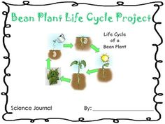 1000 Images About Summer School Life Cycles On Pinterest