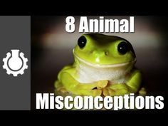 Admittedly I believed most of these misconceptions. Although I'd never heard of the one about boiling frogs.