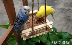 My darling budgies need entertainment everyday. They are active and social birds and so I have to make their day as lively as possible. Diy Budgie Toys, Diy Bird Toys, Parrot Toys, Parrot Bird, Parakeet Care, Budgie Parakeet, Budgies, Homemade Bird Toys, Hamsters