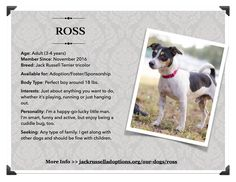 Ross is today's feat