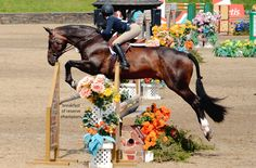 The most important role of equestrian clothing is for security Although horses can be trained they can be unforeseeable when provoked. Riders are susceptible while riding and handling horses, espec… Cute Ponies, Horse Shirt, English Riding, Equestrian Outfits, Equestrian Style, Dressage, To Infinity And Beyond, Show Jumping, Horse Pictures