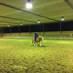 Late night rider or when you are the last to arrive the evening before the horse show  at least no crowded warm up arena.... #hafl #dressage #horseshow #horsesofinstagram #haflingersofinstagram #haflinger