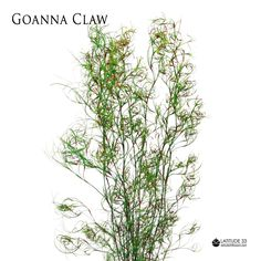 Goanna Claw makes a fantastic natural biodegradable base for all kinds of floristry #garland #wreath #arbor #tablerunner #trailingbouquet