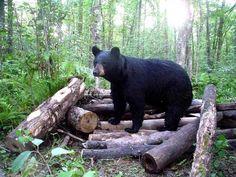 Bear Sanctuaries in Kerala, India @ Sanctuariesindia.com