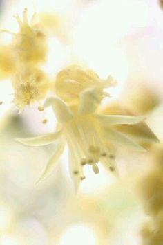 pale yellow flowers I halványsárga virágok Pastel Yellow, Shades Of Yellow, Mellow Yellow, Yellow Flowers, Pastel Flowers, 50 Shades, Soft Colors, Summer Colours, Pastel Colours