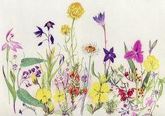 Wildflowers - Helen Fitzgerald